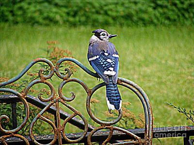 Photograph - A Backyard Visitor by Nancy Kane Chapman