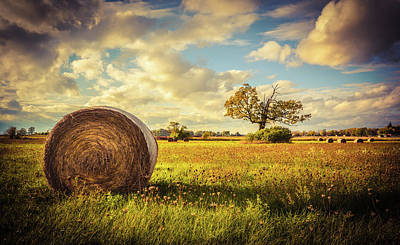 Photograph - A Bale Of Hay And A Tree by Karl Anderson