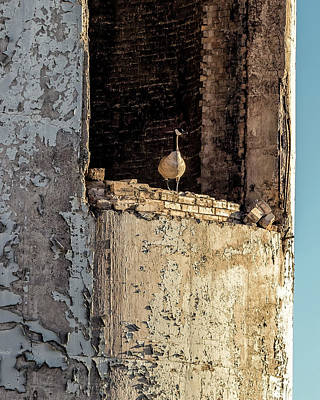 Photograph - Goose In A Tower by Belinda Greb