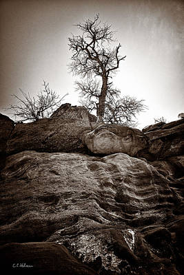A Barren Perch - Sepia Art Print by Christopher Holmes