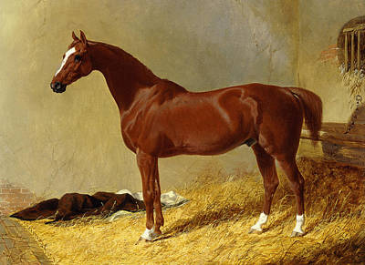 Horse Racing Painting - A Bay Racehorse In A Stall, 1843 by John Frederick Herring Snr