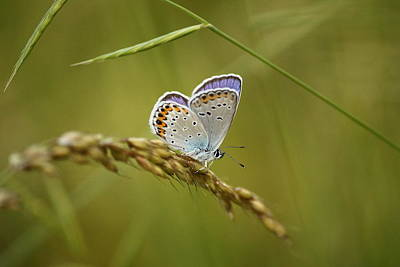 Violet Photograph - A Beautiful Butterfly In A Field by Samantha Mattiello