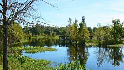 Photograph - A Beautiful Fall Day In Central Florida by Carol Bradley
