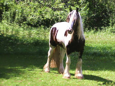 Photograph - A Beautiful Gypsy Vanner Horse Standing Alone,and Looking Alert by Rusty R Smith