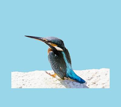 Photograph - A Beautiful Kingfisher Bird Vector by Tracey Harrington-Simpson