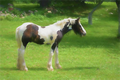 Digital Art - A Beautiful Young Gypsy Vanner Standing In The Pasture by Rusty R Smith