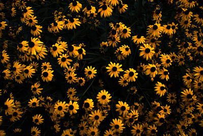 Photograph - A Bed Of Flowers by Parker Cunningham