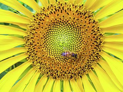 A Bee On A Sunflower Art Print