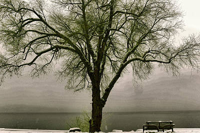 Park Benches Photograph - A Bench And Tree In The Snow by Jeff Swan