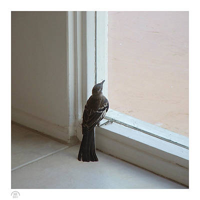 Photograph - A Bird At A Plate Glass Window by Stan  Magnan