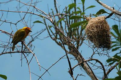 Photograph - A Bird In 3d by Paul SEQUENCE Ferguson             sequence dot net