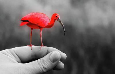 Flamingo Mixed Media - A Bird In Hand by Mountain Dreams