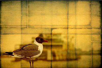 Photograph - A Bird In New Orleans by Alice Gipson