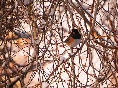 Photograph - A Bird In The Bush by Jacqueline  DiAnne Wasson