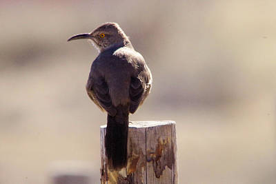Fowl. Wildlife Photograph - A Bird In The Desert by Jeff Swan