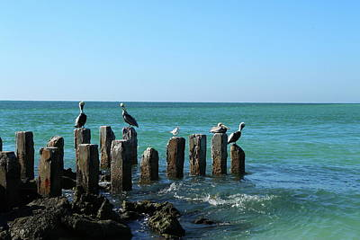 Photograph - A Birds Meeting Place by Christiane Schulze Art And Photography
