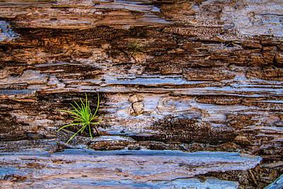 Photograph - A Bit Of Green In Rock by Debra and Dave Vanderlaan
