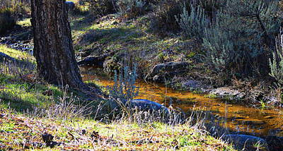 Photograph - A Bit Of Peace by Glenn McCarthy Art and Photography