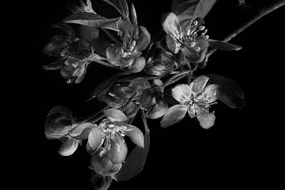 Photograph - A Black And White Spring by Mike Eingle