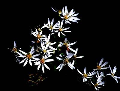 Photograph - A Black And White Study by David Lane
