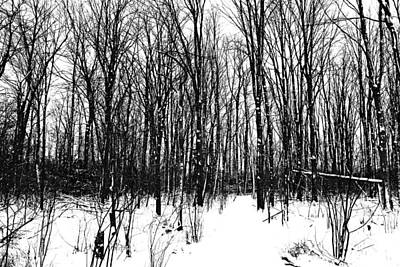 Photograph - A Black And White Winter by Debbie Oppermann