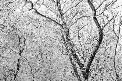 Photograph - A Black And White Winter by Mike Eingle