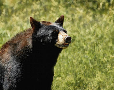 Digital Art - A Black Bear by Ernie Echols
