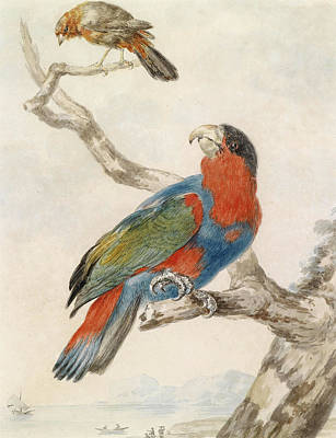 Drawing - A Black-capped Lory On A Branch And A Flycatcher Against A Coastline by Abraham Meertens