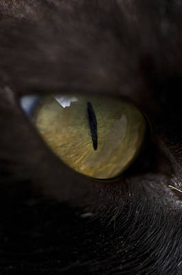 Of Black Cats Photograph - A Black Cat In Burwell, Ne by Joel Sartore