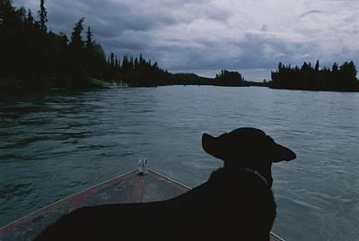 A Black Labrador Dog Travels Print by Joel Sartore