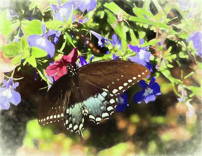 Photograph - A Black Swallowtail Butterfly On A Group Of Red And Purple Flowers by Rusty R Smith