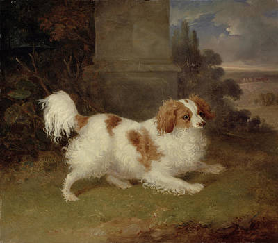 1780 Painting - A Blenheim Spaniel by William Webb