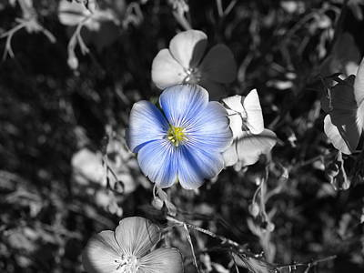 Photograph - A Blue Flax Special by DeeLon Merritt