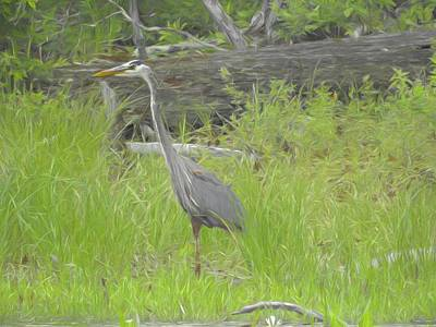 Photograph - A Blue Heron Stalking The Marsh. by Rusty R Smith