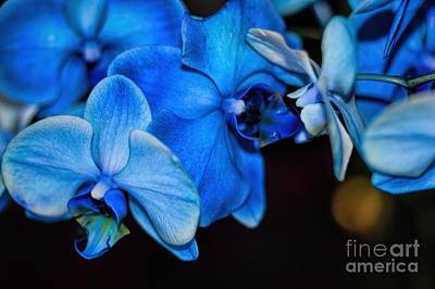 Photograph - A Blue Kiss by Diana Mary Sharpton