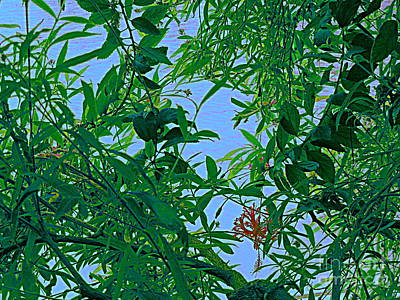 Photograph - A Blue Sky by Nancy Kane Chapman