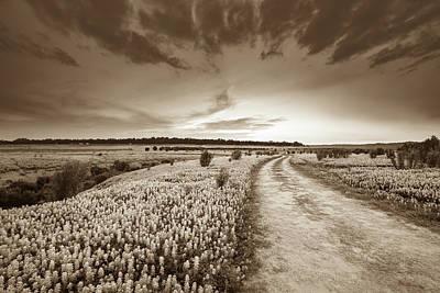 Flower Field Photograph - A Bluebonnet Field Under Evening Sky - Sepia - Texas by Ellie Teramoto