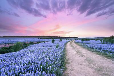 Heavenly Photograph - A Bluebonnet Field Under Evening Sky - Texas by Ellie Teramoto