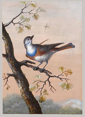 A Bluethroat Art Print by Christoph Ludwig Agricola
