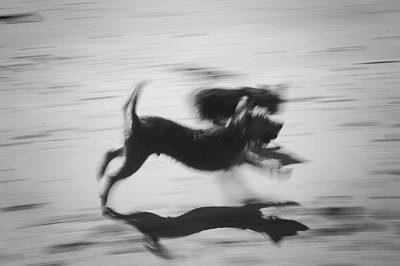 Photograph - A Blur Of Fur by Christopher Rees