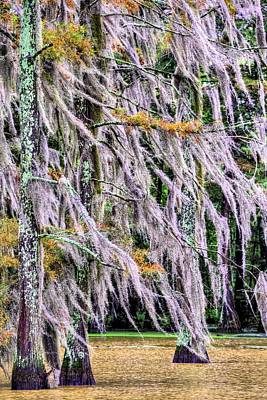 Cypress Swamp Photograph - A Blustery Autumn Day by JC Findley