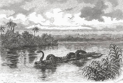 Python Drawing - A Boa Floating On A Log On The Rio by Vintage Design Pics