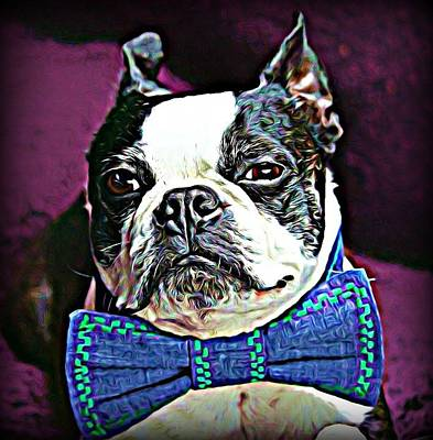 Dogs Wall Art - Photograph - A Boston Named Shorty by Raven Hannah