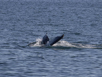 Photograph - A  Cool Whales Tail by Roberta Byram