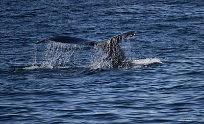 Photograph - The Tail Of A Whale by Roberta Byram