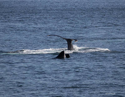Photograph - Tails Of Whales by Roberta Byram