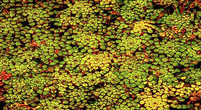 A Botanical Mosaic Art Print