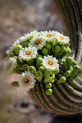 Photograph - A Bouquet Of Saguaro Blossoms by Saija Lehtonen