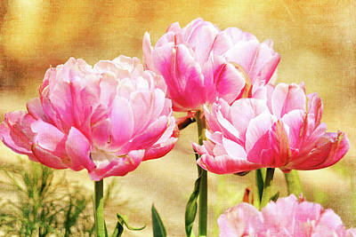 Photograph - A Bouquet Of Tulips by Trina Ansel