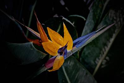 Photograph - A Bright Blooming Bird by Tim Good